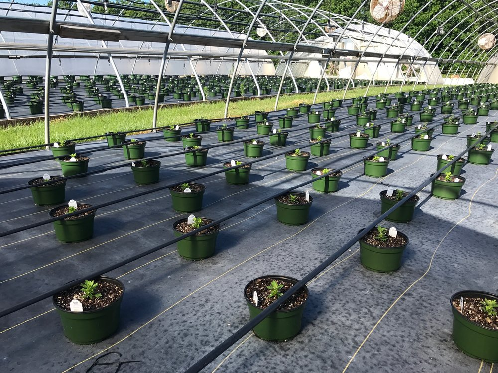 Greenhouse #4 - 2017