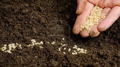 seed -