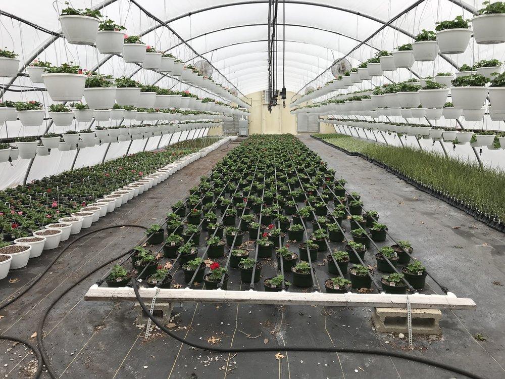 - Greenhouse #1