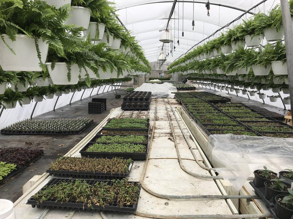 - Greenhouse #2
