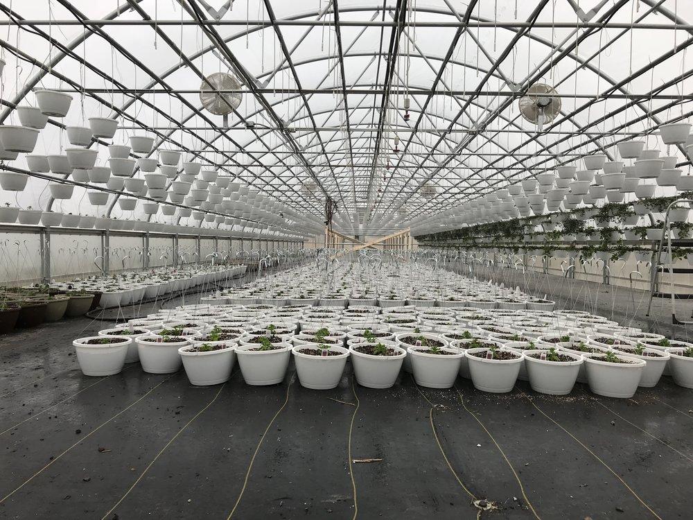 - Greenhouse #11