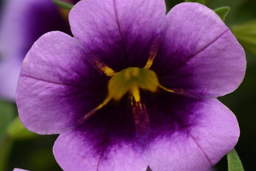 Purple Heart -