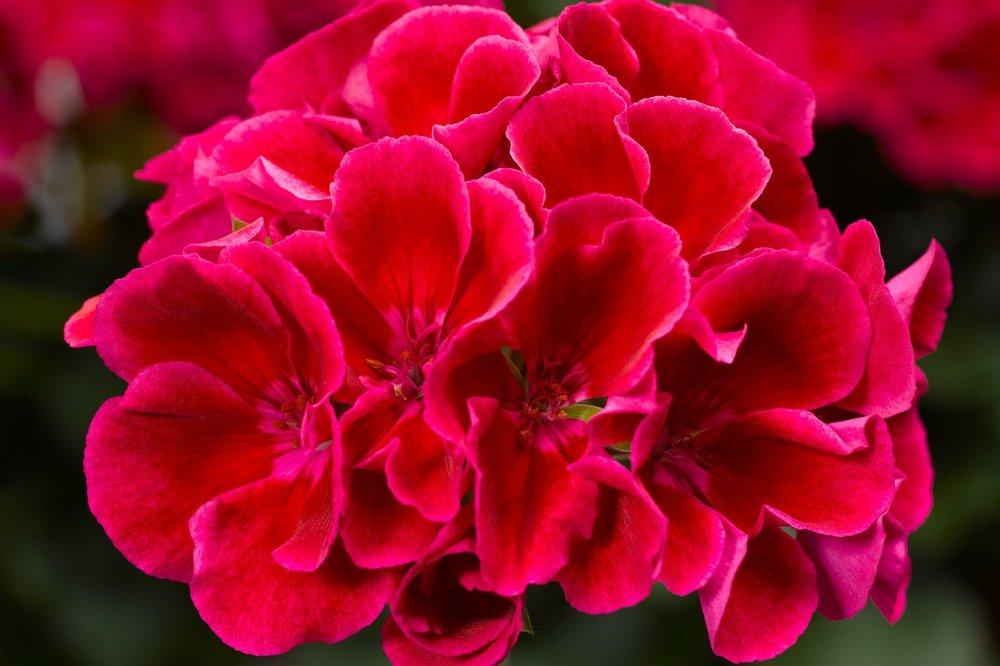 Crimson Flame -