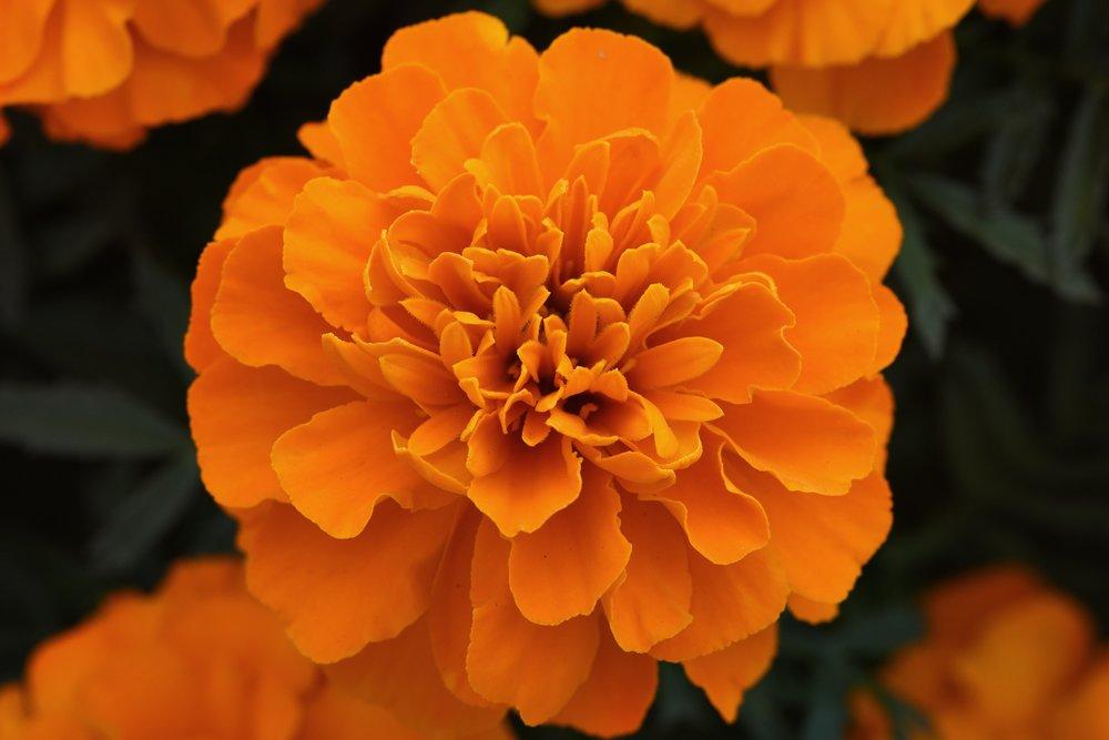 Orange Deep -