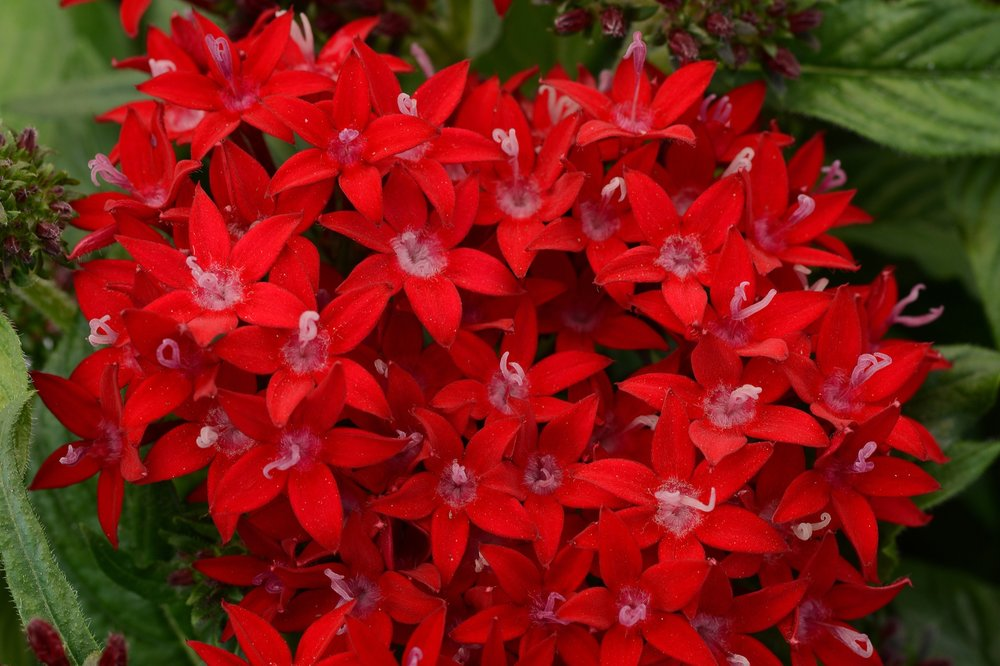 Red -