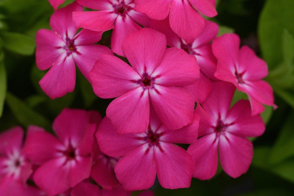 Hot Pink -