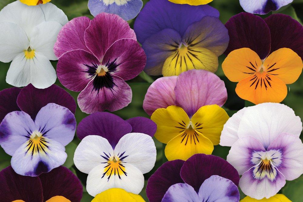 Spring Select Mix -
