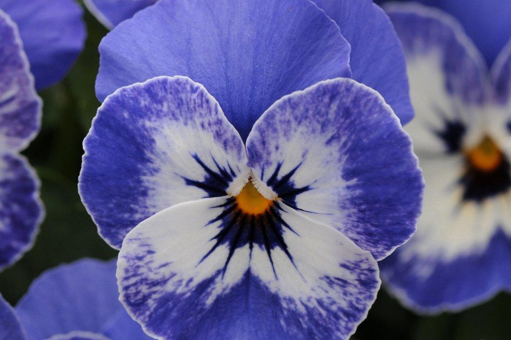Delft Blue -