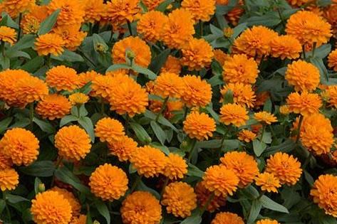Dbl Orange Bright -