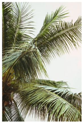 Honeymoon Hotel Palm Trees Above Me Unframed Print  - £19.95