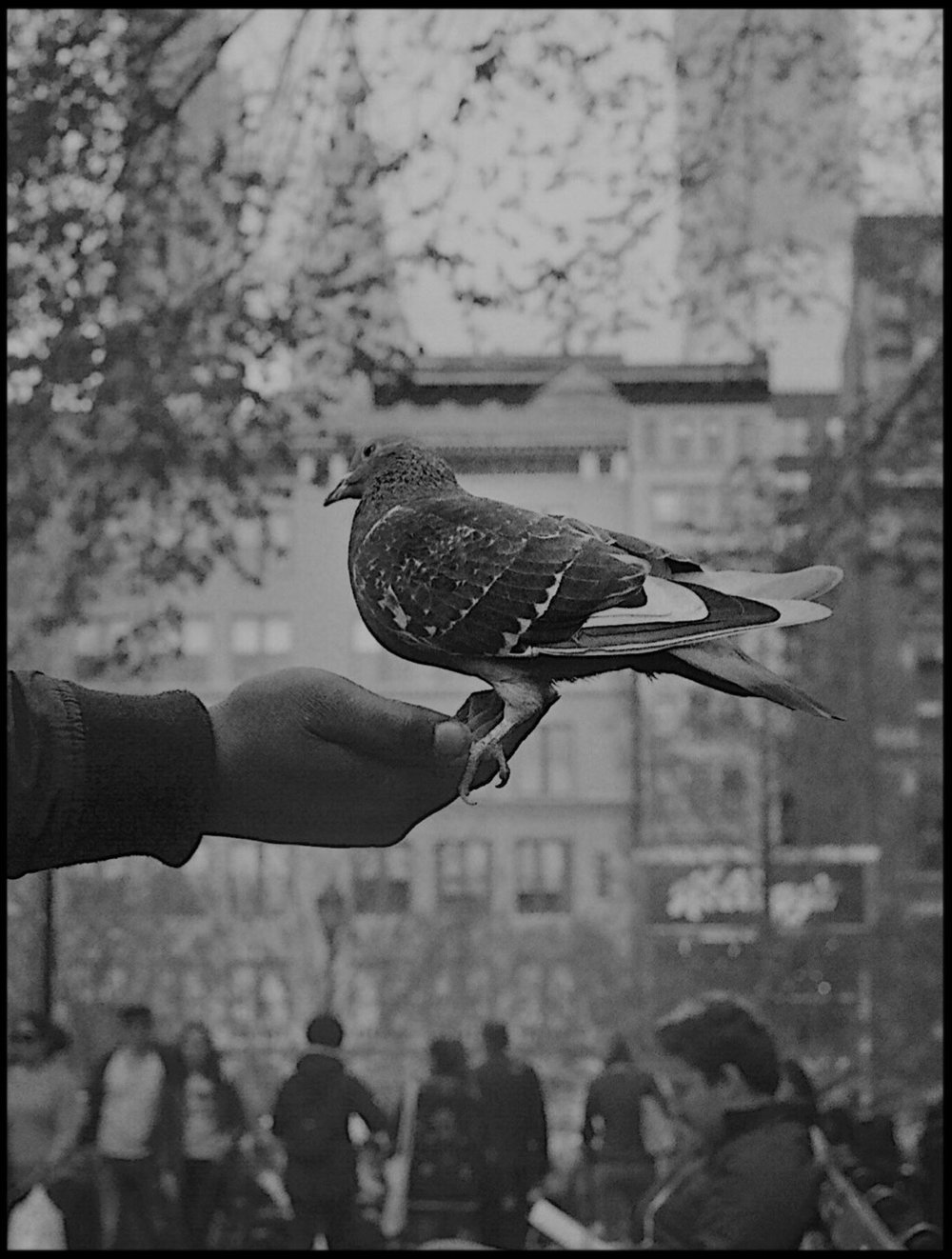 Bird Of A Feather I. Madison Square Park, NYC. 2018