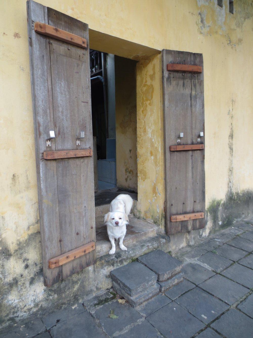 dog in Vietnam
