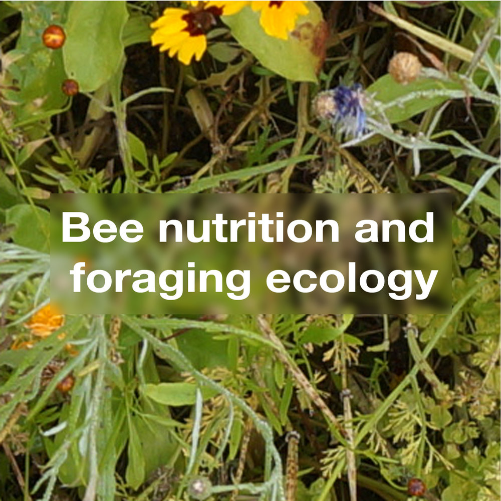 Bee Nutritional and Foraging Ecology