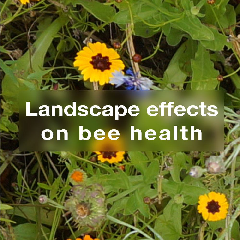Landscape effects on bee health