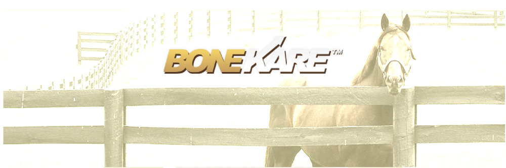 bonekareusa.blog.launch.jpg