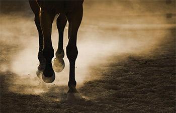 Horse-legs.jpg