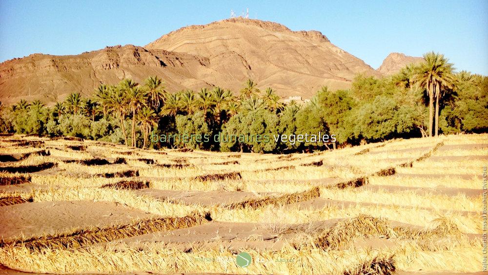 Dans la palmeraie d'Amezrou, on a essayé de stabiliser les dunes avec des bâtons en bois et des filets, avec des plaques ondulées de fibrociment et dernièrement avec des branches de palmiers. Tous ces systèmes ont du mal à retenir le sable.