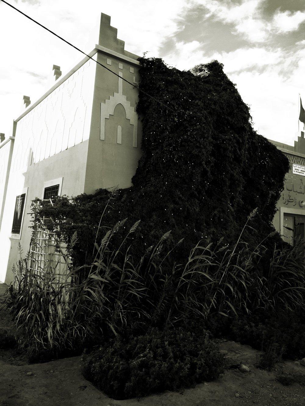 building in Beni Zoli, Zagora, covered by climbing plants.