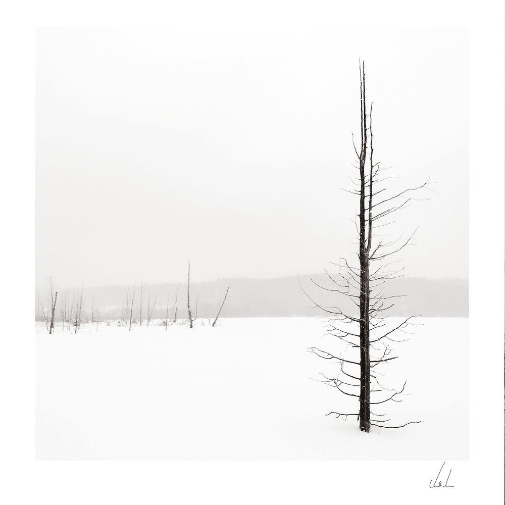 Narada-Lake-Study-2.jpg