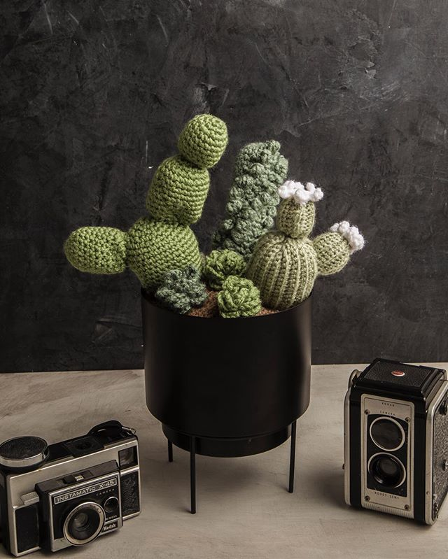 Can I tell you a (not so) secret? This cacti arrangement might be my favorite that I made for @ramonrgomez. 🌵💚 I don't know what it is about the combination of cacti that I'm just so drawn to! 🤩 • • To be completely transparent, this arrangement and the other one that was made took me quite a many try to get just right. 😅 I must have made countless little tubes and balls using different hook sizes to get each cactus just right. But that's the life of a maker, amirite? ➰〰️ • • Want to see the other arrangement I made for him? Check out his IG feed to see the other one! 🤗 • • 📸: @ramonrgomez