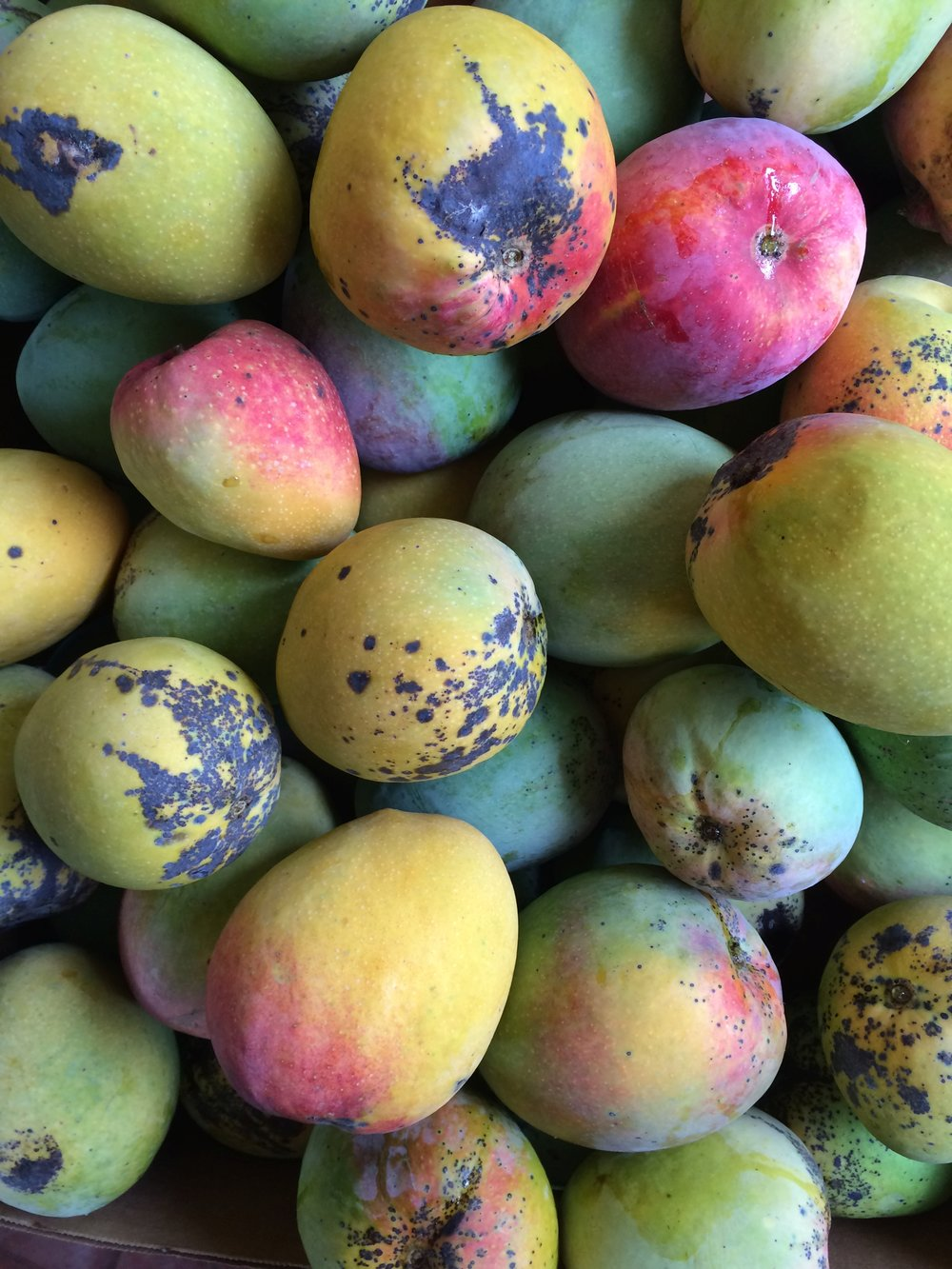 'Mulgoba' mangos