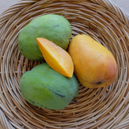 5b00f17d1b959 Mango — The Mango Place