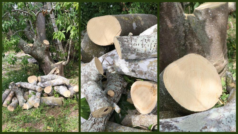white sapote wood.jpg