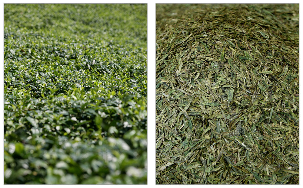 Tea Field - Huqiu, Fujian Province info   •   Longjing - Dragon Well Green Tea info