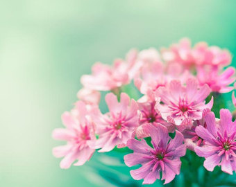 Pink and teal flowers gallery flower decoration ideas teal and pink flowers images flower decoration ideas pink and teal flowers images flower decoration ideas mightylinksfo