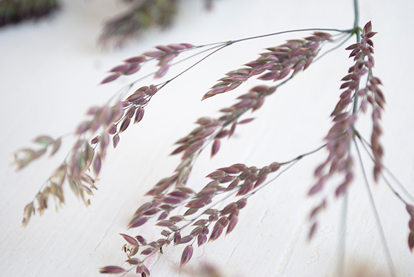 journal-wheat-detail-1.jpg