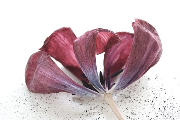 jour-florals-3A-oct16.jpg