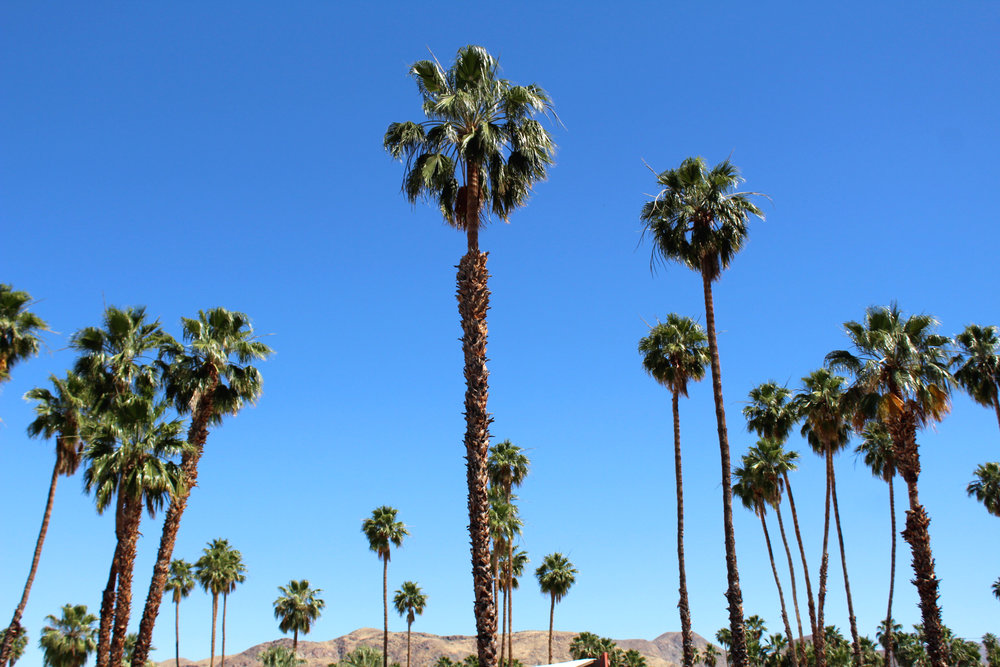 24 Hours in Palm Springs