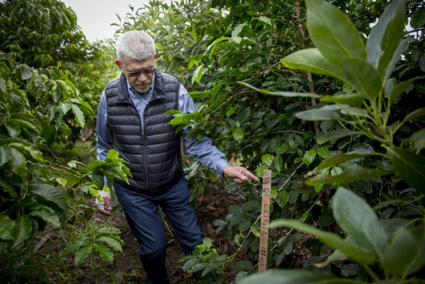 ARABICA GENOME SEQUENCED IN PURSUIT OF QUALITY AND ADAPTATION -