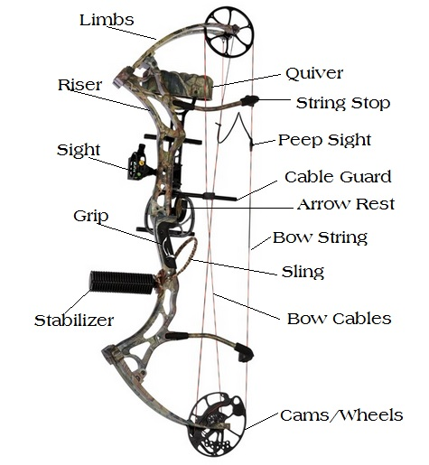 Basic Diagram of a Compound Bow.