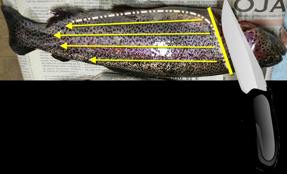 11vonfleck-fish-cuts.png