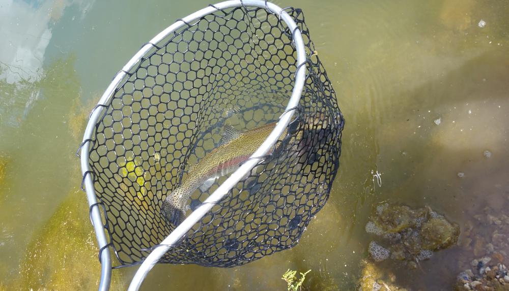 3vonfleck-trout-rubber-net