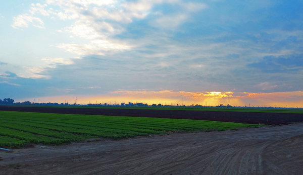 An area that was previously alfalfa, but instead was now unhuntable rows of crops. Also, perk of hunting–the most beautiful sunrises and sunsets!