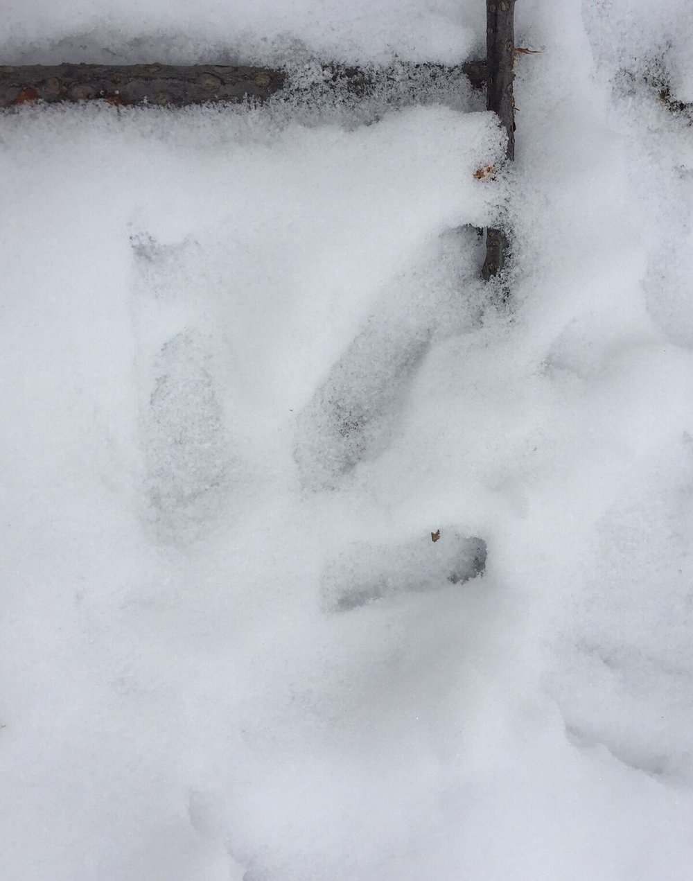 snow-tracks_preview.jpeg.jpg