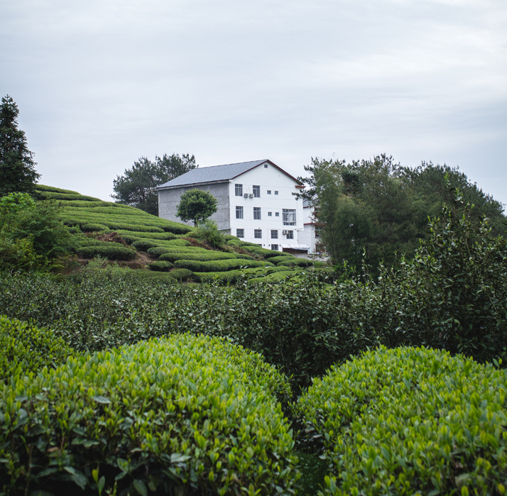 Tea Master Xu's factory and warehouse on Wuyi Mountain.