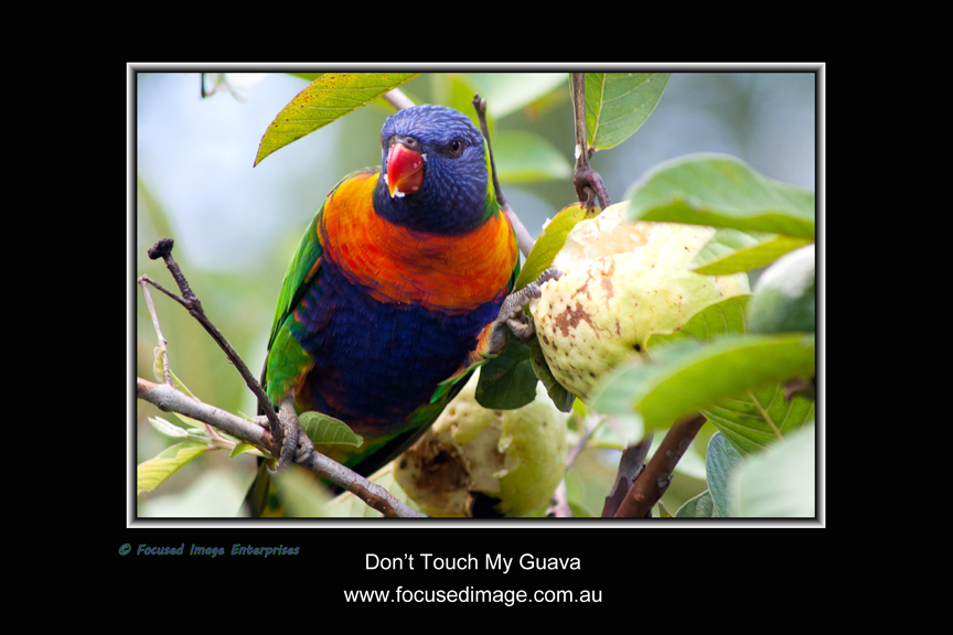 Don't Touch My Guava.jpg