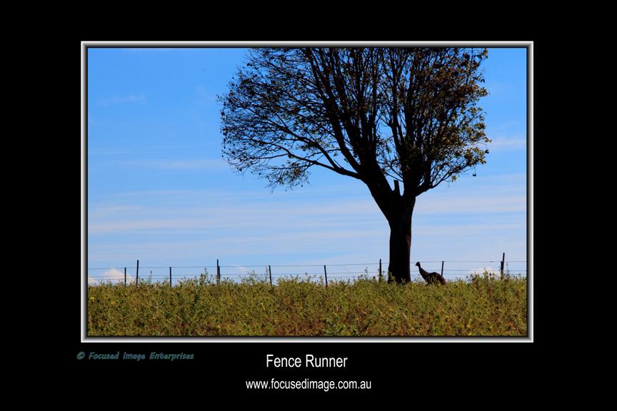 Fence Runner.jpg