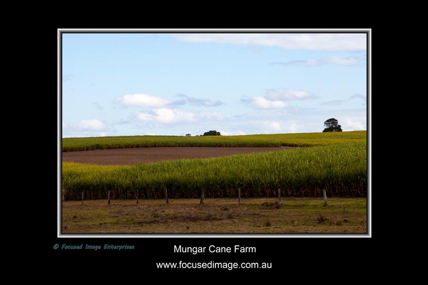 Mungar Cane Farm.jpg