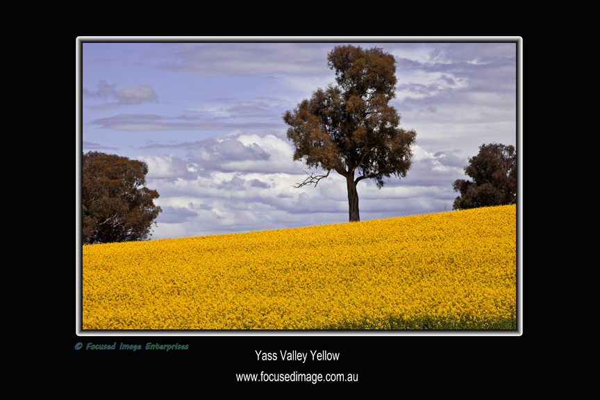 Yass Valley Yellow.jpg
