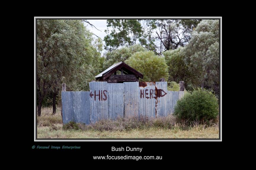 Bush Dunny.jpg