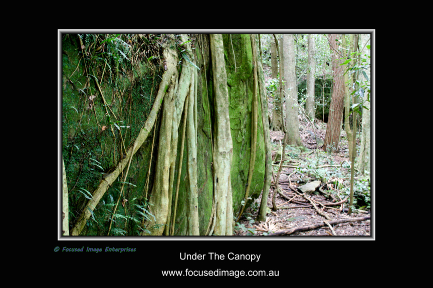 Under The Canopy.jpg