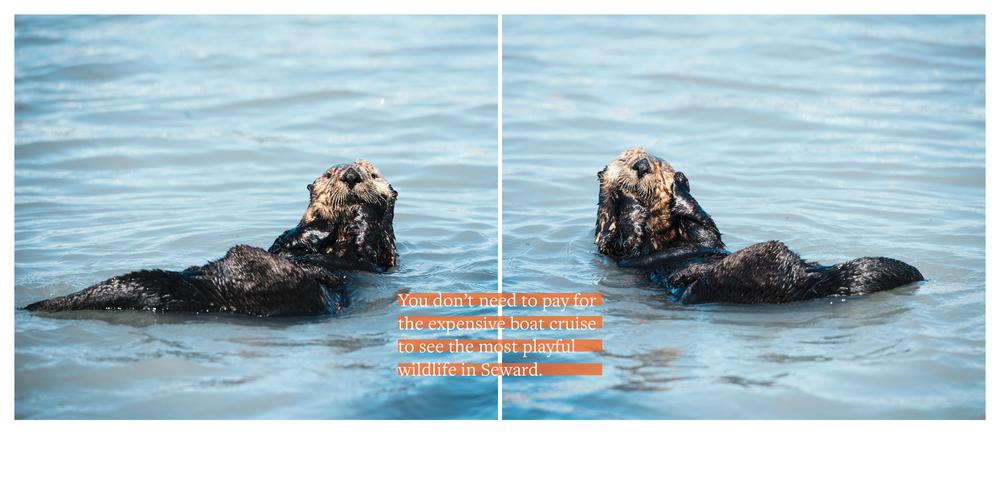 Otters_Alaska.png
