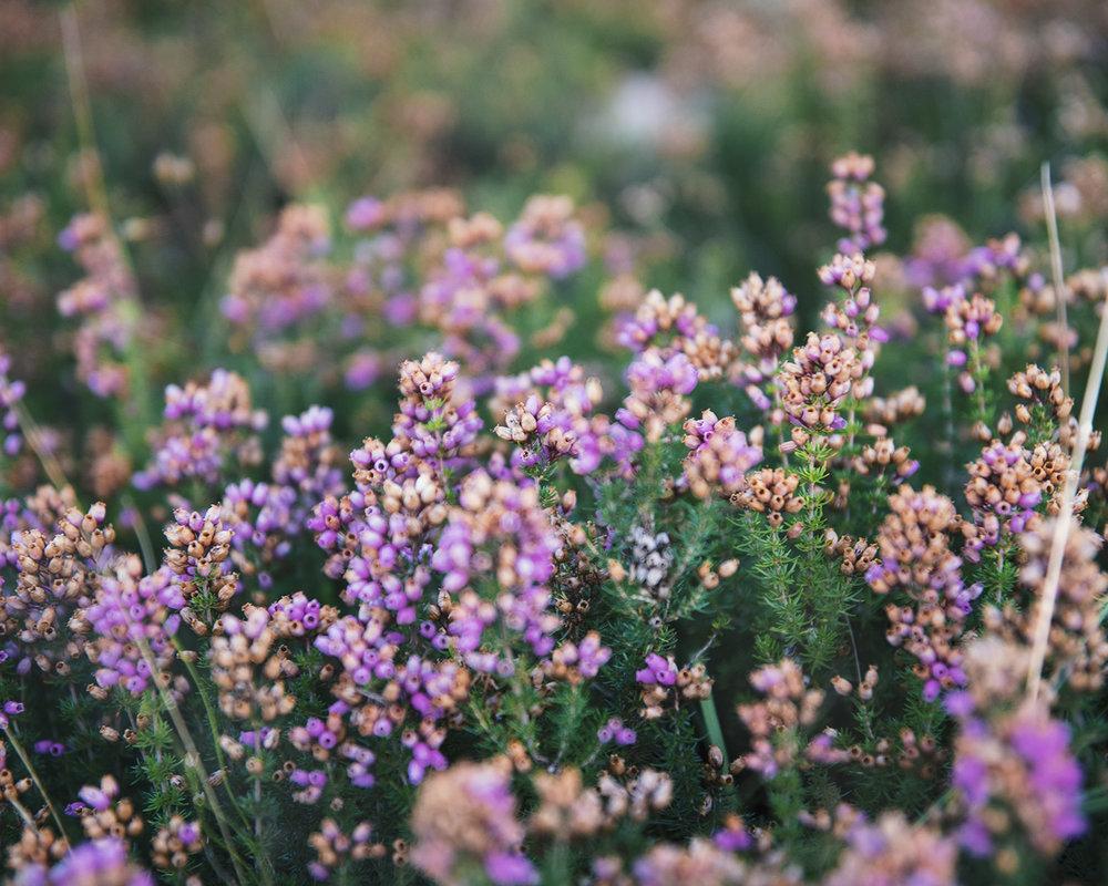 flowers_camino.jpg