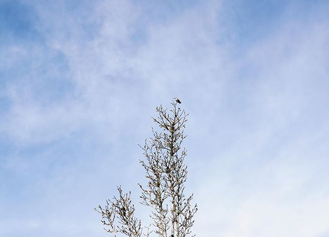 The closest I've come to photographing the hummingbird at work