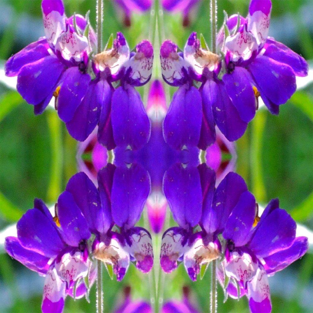 ted reynolds image 1.jpg