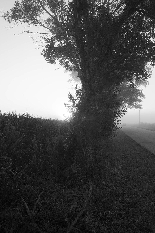 matthew-carroll-480.jpg